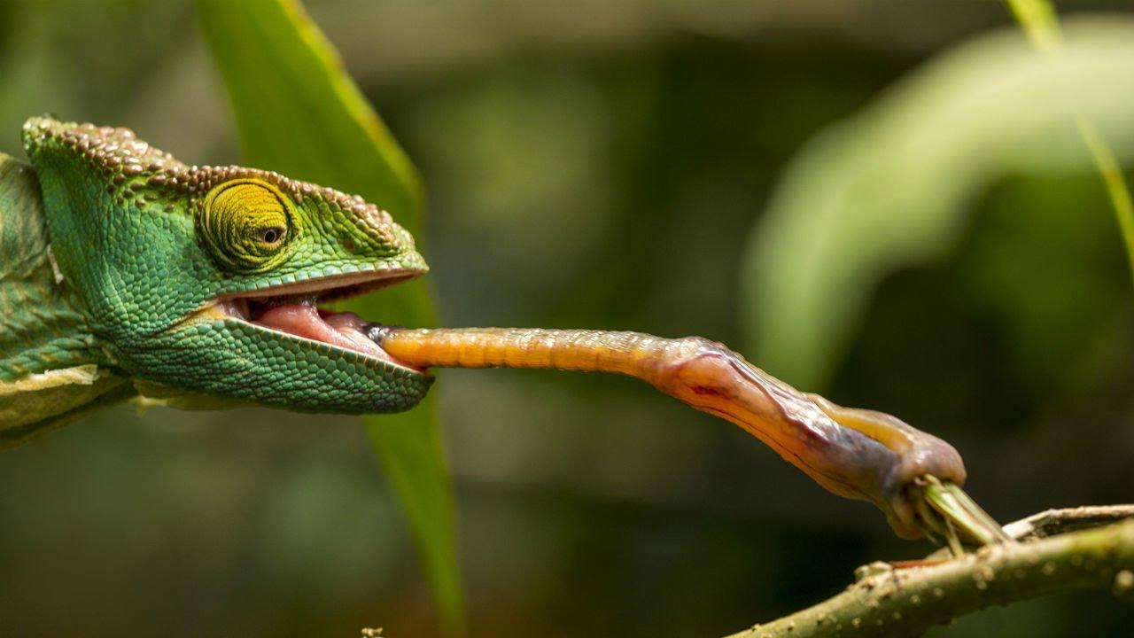 Kom uit de kast reptilians! (column)