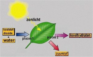 Spiksplinternieuw Fotosynthese (column) - Indigo Revolution XI-87